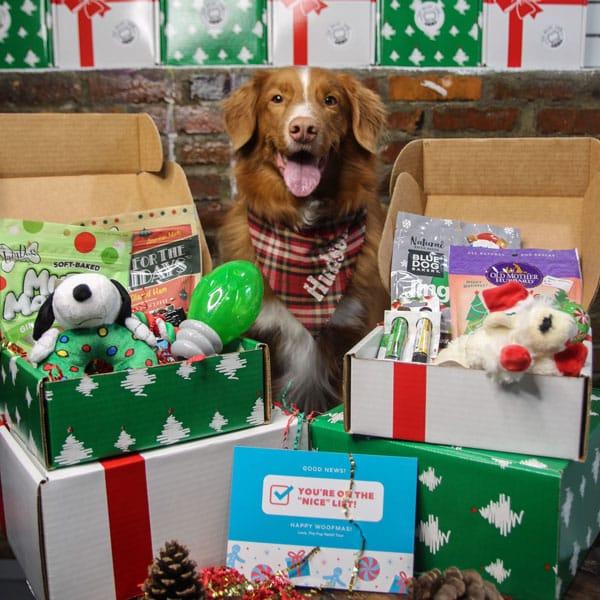 Pup-Santa-Box